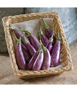 Fairy Tale Eggplant Seed, Vegetable Seeds, Ship From US - $16.00
