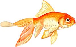 Fancy Goldfish Pet Fish Colorful Aquarium Vinyl Decal - Car Home Truck S... - $5.99+