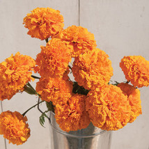 Giant Orange Marigold Flower Seeds - $9.00
