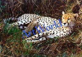 Digital download,Cheetahs,Photography,Christmas decor,Home decor wall,Pr... - $4.50