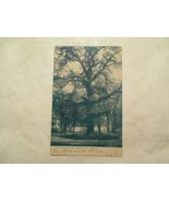 Iowa Postcard Council Oak Sioux City 1907 IA  - $5.99