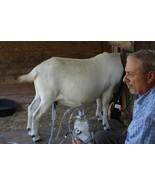 Dansha Farms™ The Frontier 1 Gallon Goat Sheep Cow Milk Machine Recharge... - $207.85