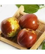Hot New Arrival 10pcs/bag Organic Ziziphus Sweet Jujube Planting bonsai ... - $8.18