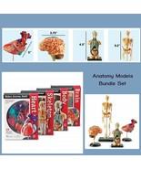 4 Anatomy Model Human Set Human Body Brain Skeleton 132 Ps Study Class Gift New - $118.95