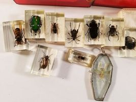 Insect Entomology Beetle Collection 14+ Specimen Lizard Dried Real Taxidermy image 6
