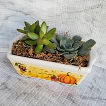 Fall Succulent Dish Garden in vintage harvest loaf pan, Ceramic pumpkin planter image 6