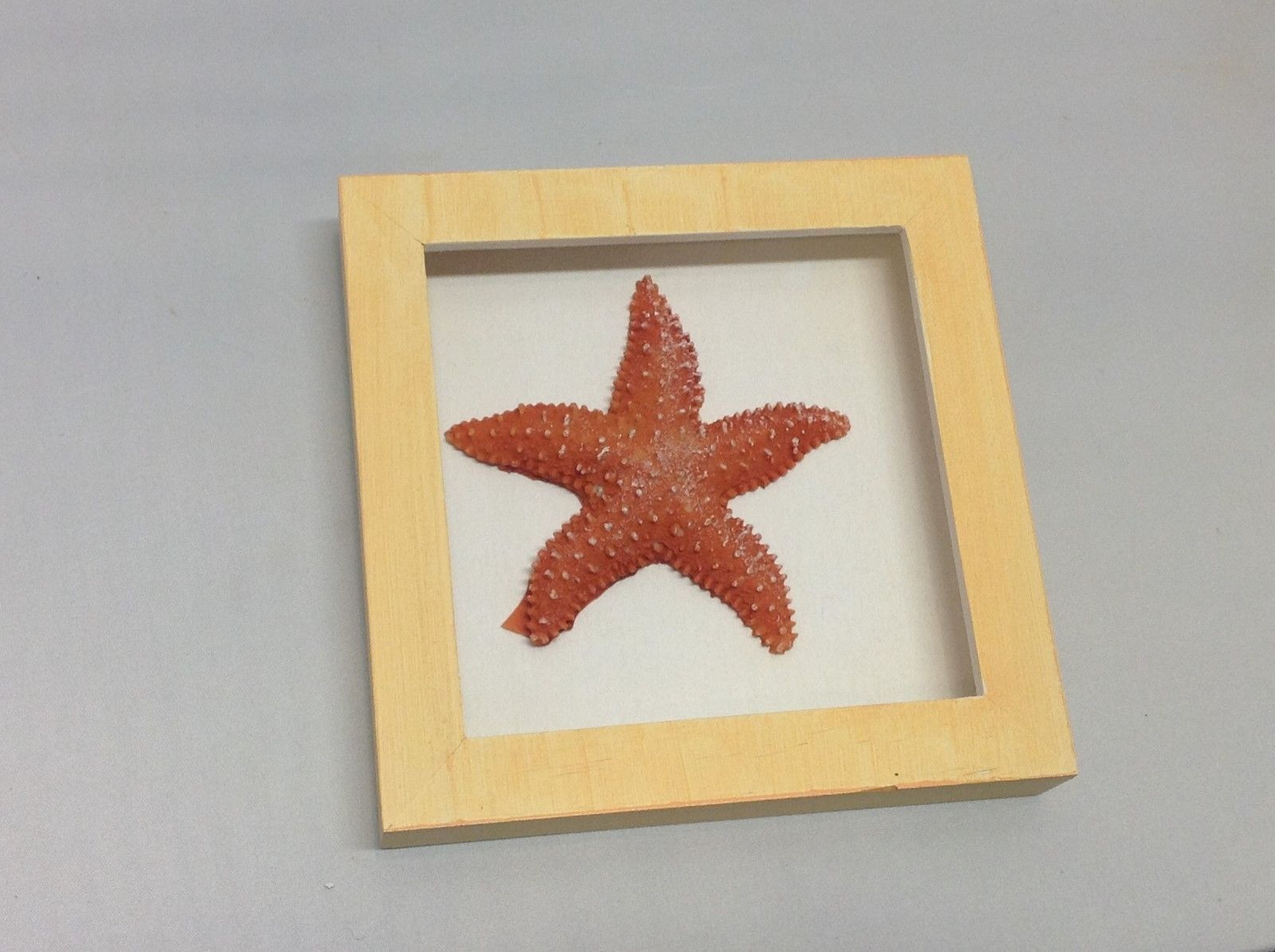 NEW Orange and Red Resin Starfish Shadow Boxes