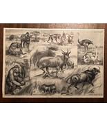 "Vintage Engraving Print of AFRICAN ANIMALS Eland Ostrich Unframed 6"" x 8.5"" - $14.00"