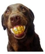 HUMUNGA BLING Funny Teeth Rubber Pet Dog Toy Fetch Ball NEW! - $12.56
