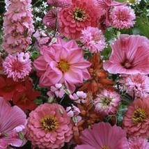 SHIP From US Wildflower Pink Shades Flower Seeds (Mix) 200+ Seeds UTS2 - $20.99