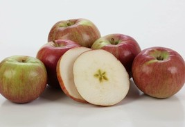 Kauffman Orchards Homegrown McIntosh Apples, Fresh-picked in Lancaster... - $28.50+