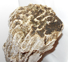 Huge coral vintage Florida unbleached natural ocean find 1990 hand scave... - $25.00