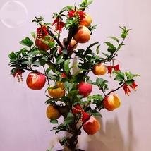 10 Seed Heirloom Indoor Bonsai Red Apple Tree, DIY Beautiful Tree DO - $8.99