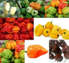 SHIP From US, 1 gram 200 Seeds Rainbow Habanero Mix, DIY Vegetable Seeds ZJ - $32.99