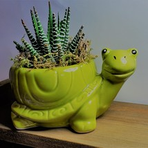 "Succulent in Ceramic Turtle Pot Live Haworthia Zebra Plant 5"" Green Planter image 4"
