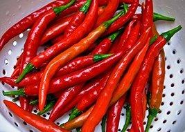 25 Seeds of Cayenne Long Slim Hot Pepper - Capsicum Annuum - $21.09
