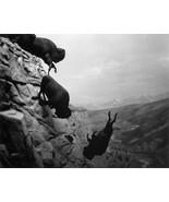 Falling Buffalo 22x30 Western Art Photograph - $81.09