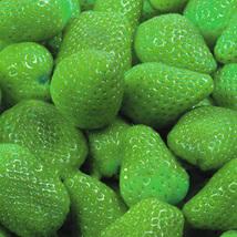 BEST PRICE BELLFARM 9 Packs Strawberry Seeds,DIY Fruit Seeds QC386M DG - $6.99