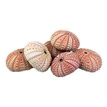 NW Wholesaler Natural Sea Urchin Shells for Home Decor, Beach Decor, Ter... - $10.94