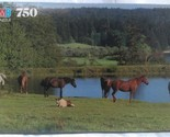 Horses in Pasture Puzzle M B 750 Pcs. WA 1991 17 3/4 x 23 in. Oxford 4848-20