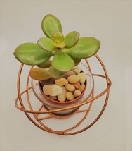 "Baby Jade Succulent in Rose Gold Planter, Crassula Plant, Metal Glass Pot, 4"""