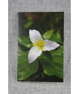 Photo Notecard Wildflower Western Trillium 4x6 Blank Notecards - $4.25