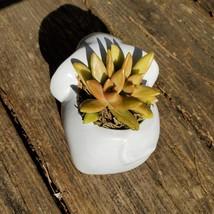 "Elephant Planter & Succulent, 4"" grey ceramic animal, Golden Glow Sedum Adolphi  image 5"