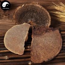 Feng Wo Ling Zhi 蜂窝灵芝, Reishi Mushroom, Ganoderma Lucidum, Wild Lingzhi - $24.99