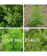 New Home Garden Plant 200 Seeds Artemisia Annua Seeds - One-year Mugwort... - $10.40
