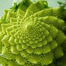 100Pcs Broccoli Romanesco Organic Vegetable Seeds Brassica Oleracea Seed - $19.27