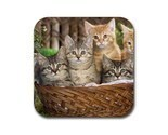 Tabby kitty kitten cat cats 2 rubber coaster  square 2 thumb155 crop