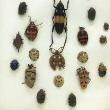 """Insect Entomology Lot Collection 27pc Specimen Beetle 8.5""""x6.5"""" Frame image 4"""