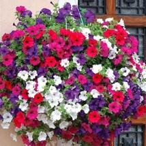 Trailing Petunia Mixed Colors Hybrida Pendula 25 Annual Seeds image 1