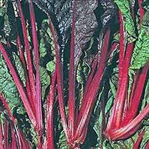 Swiss Chard Seeds, Ruby Red, Heirloom, 50 Seeds, Non GMO - $4.49