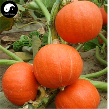 Buy Red Pumpkin Seeds 60pcs Plant Diabetes Vegetable Melon Cucurbita Mos... - $9.99