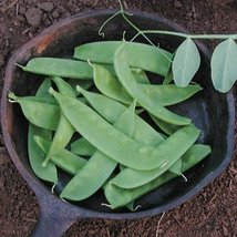 3 Oz Organic Seeds of Oregon Sugar Pod II Peas Conventional & Organic - $25.05