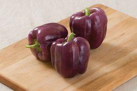 SHIP FROM US 50 Seeds Islander (F1) Sweet Bell Pepper,DIY Vegetable Seed... - $35.99