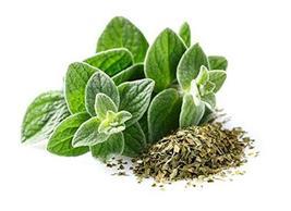 Sow No GMO Oregano Italian Non GMO Heirloom Culinary Garden Herb 100 Seeds - $2.45