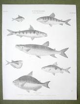 FISHES Salmon Genus Salmo - 1820 ABRAHAM REES Antique Print - $12.60