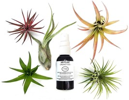 Tillandsia Air Plant Lot Plants Organic Fertilizer Food Bottle Indoor As... - $22.99
