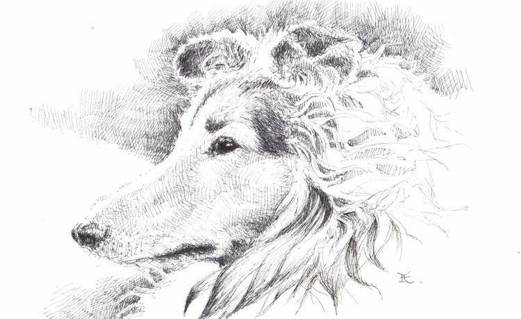 "Akimova: COLLIE DOG, ink, black&white, 8""x 5"""