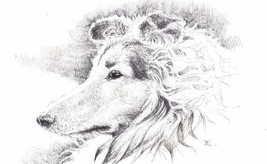 "Akimova: COLLIE DOG, ink, black&white, 8""x 5"" - $15.00"