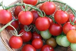 250 Seeds of Sweet Chelsea VFNT Hybrid - Tomatoes Fruited - $39.50