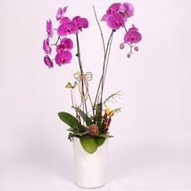 100pcs Rare Orchid Bonsai Balcony Flower Blue (4), HZ Beautiful Flower S... - $8.89