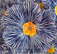 100 pcs Rare Flower Seeds Beautiful Zebra Evening Primrose Seeds Balcony Bonsai - $7.00