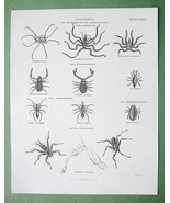 ANNULOSA Class Arachnides Spiders - 1823 Copperplate Engraving Print - $16.83