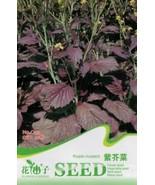Original Package 30 Purple mustard Seeds Brassica Delicious Vegetable Se... - $2.15