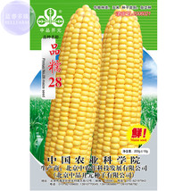 'Ping Nuo 28' Yellow Glutinous Corn Seeds, approx 200 grams, original pack, hybr - $23.66