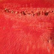 HeirloomSupplySuccess 10 Heirloom Dixie lee Watermelon seeds  - $3.99