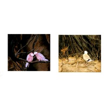 Pink And Yellow, A Pair of Paintings of Endangered Specie Birds, Each 14... - $700.00